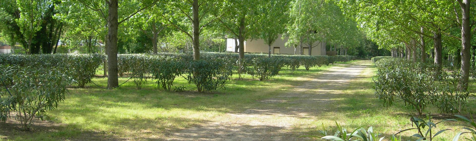 Camping village *** La Gabinelle, camping to Béziers: location rental near Sérignan for tent, camper and caravan